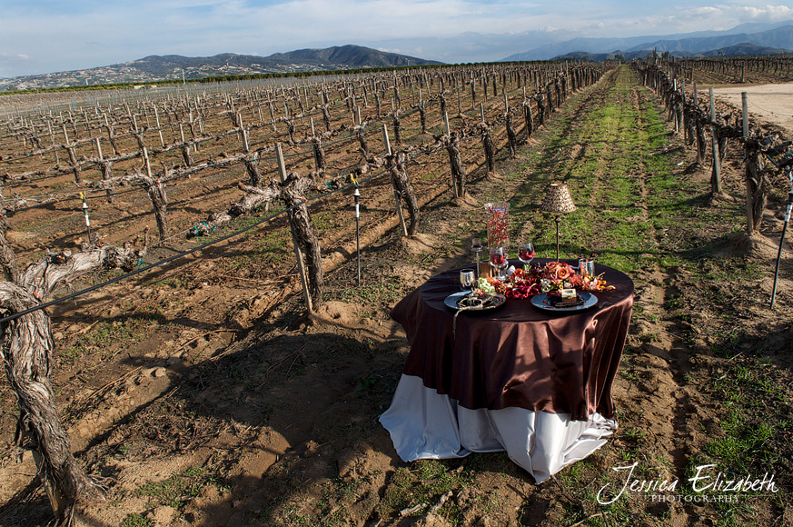 Ponte_Winery_Wedding_Photography_Wide_Vineyard.jpg